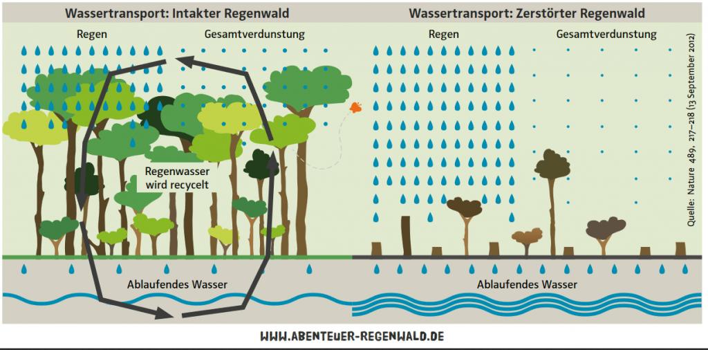 wasserkreislauf regenwald
