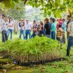 Bedandtree.com – Bäume pflanzen mit Hotelbuchungen