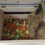 Die Wurmkiste – Bio-Dünger selbst gemacht