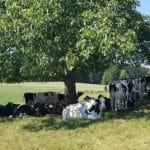 Ökologische Landwirtschaft beginnt in Brüssel