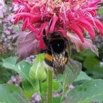 Ein Sandarium für Wildbienen anlegen – Bienenschutz im eigenen Garten